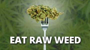 Comer hierbas crudas impide el cáncer de intestino, fibromialgia y enfermedades neurodegenerativas